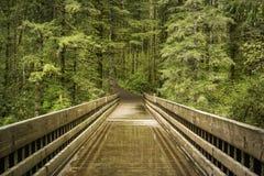 桥梁在华盛顿 免版税库存照片