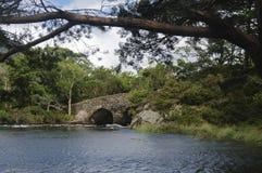 桥梁在基拉尼国家公园,凯里郡,爱尔兰,欧洲 库存照片