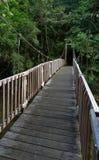 桥梁在密林 库存照片