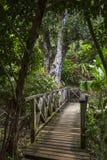 桥梁在密林 库存图片
