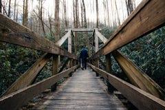桥梁在森林 免版税库存图片