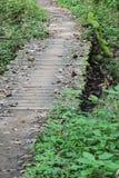 桥梁在森林 图库摄影