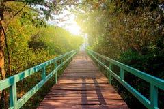 桥梁在深自然绿色森林里 免版税库存照片