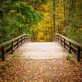 桥梁在秋天森林里 免版税库存图片