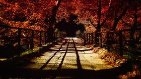 桥梁在秋天 免版税库存图片