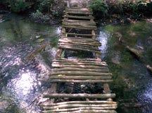 桥梁在nabran森林里 库存图片