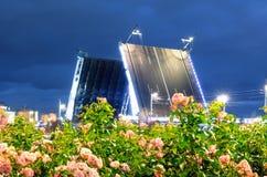 桥梁宫殿在圣彼德堡和开花的玫瑰的晚上 库存照片
