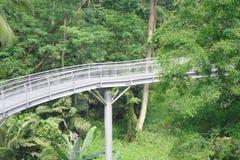 桥梁森林新加坡 免版税库存图片
