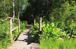 桥梁森林 免版税库存照片