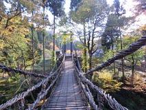 桥梁通过森林 免版税库存照片