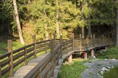 桥梁通过森林 免版税库存图片