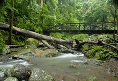 桥梁雨林 免版税库存照片
