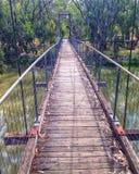 桥梁水在内地Forrest河 库存照片