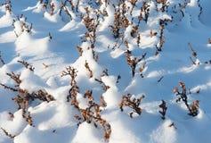 桦属nana在冬天 免版税库存图片