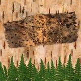 桦木抽象的背景 免版税图库摄影
