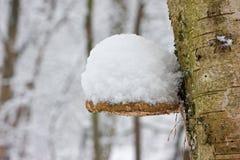 桦树下托架雪 免版税图库摄影