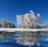 桦树冬天木头 免版税库存照片