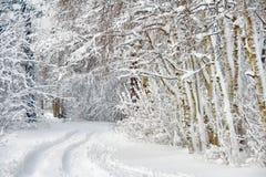 桦树冷漠的森林公路 库存图片