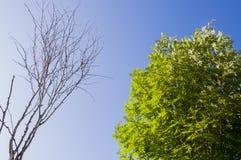桦树分支与叶子和无在与蓝天的背景 夏天对比对面 库存图片