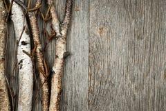 桦树分支背景 免版税库存图片