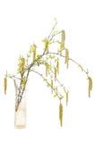桦树分行玻璃花瓶 免版税库存图片