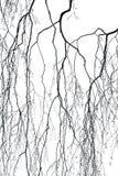 桦树分行 免版税图库摄影