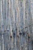 桦树反射 免版税库存图片