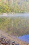 桦树和海滩 库存图片