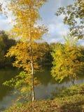 桦树和灌木在岸 免版税库存照片