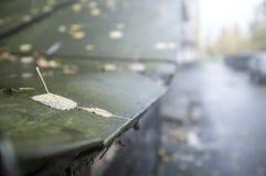 桦树和白杨木下落的叶子在老湿金属屋顶 免版税库存照片