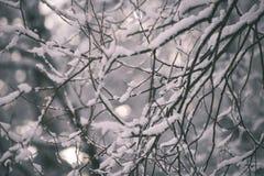 桦树在一冷的天在多雪的冬天森林-葡萄酒f里 库存照片