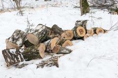 桦树在雪混在一起在冬天阴云密布公园 图库摄影