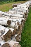 桦树堆木头 免版税库存图片