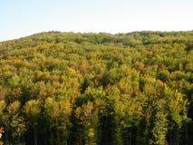 桦树山森林在秋天 免版税库存照片