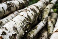桦树日志 库存图片