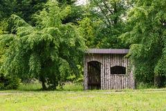 桦树木头一个小屋  库存图片