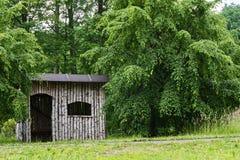 桦树木头一个小屋  库存照片