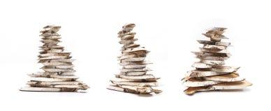 桦树木头切片 皇族释放例证