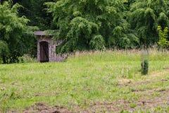 桦树木头房子在树中间的 免版税库存照片