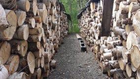 桦树木柴堆背景 库存图片