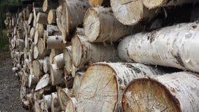 桦树木柴堆背景 图库摄影