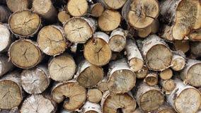 桦树木柴堆背景 库存照片