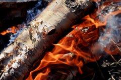 桦树木柴燃烧 免版税图库摄影