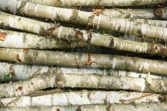 桦树木头纹理 免版税库存照片