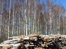 桦树木头,立陶宛 库存照片