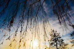 桦树枝杈日落 图库摄影