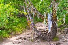 桦树树与kyira多彩多姿的不同的丝带的是 免版税图库摄影