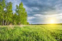 桦树树丛和绿色领域在日落 免版税库存图片