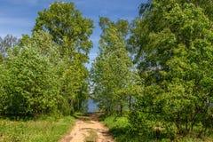 桦树树丛河叶子 库存照片