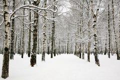 桦树树丛美好的积雪的分支在俄国冬天 免版税库存照片